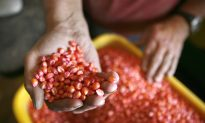 New Technology Spurs Consolidation in Seed Industry
