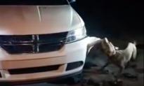 Video of Dog Destroying Car Sparks Internet Outrage