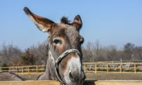 Donkeys Put in Jail for Eating Expensive Plants