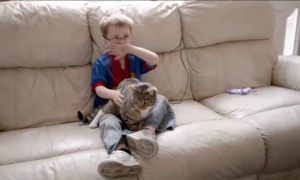 5-year-old playing soccer gets attacked by bullies, but cat sees—doesn't let them get away with it