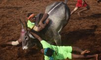 Five Gored to Death During Bull-Taming Festival