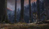 Film Review: 'White Fang'