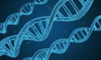DNA Nanorobots Successfully Target and Kill Cancer