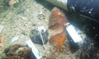 7000-Year-Old Native American Burial Site Discovered Beneath the Gulf of Mexico