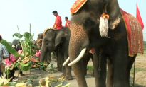 Elephants Treated to a Fruit Buffet on Thai National Elephant Day