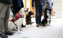 Vets With PTSD Welcome Feds Promise of Tax Credit for Service Dogs