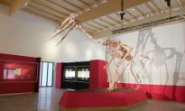 'Emperor of the Skies' Dinosaur Unveiled in Germany