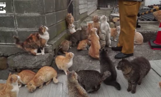 This island is a cat-lover's dream. But wait until you see just how many cats there are