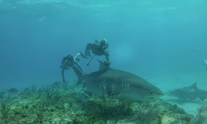 Diver holds up something that looks like a shark, but what they're chasing down—I don't believe it