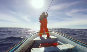 Divers on the boat, when they start screaming 'right there!'—he gets his knife out
