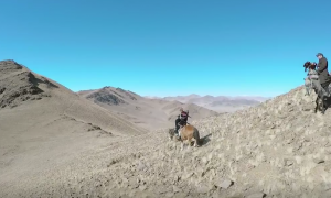 They attach a GoPro to an eagle, what it captures—I would never dare to cross one