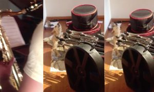 When man starts playing a bit of jazz on the saxophone, dog can't help but join in