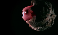 This is the closest look at a vampire squid that you'll ever get—it's crazy & gross at the same time