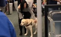 Blind woman goes through airport security with her guide dog—it's the most heartwarming sight