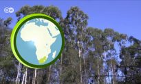 Turning Invasive Trees into Eco-Furniture