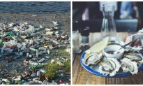 Research Needed on Impact of Microplastics on B.C. Shellfish