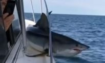 Mad Shark Jumps on Boat, and Chaos Ensues