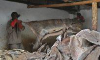 Chinese Demand for Donkey Skin Threatens Kenyan Animal Population