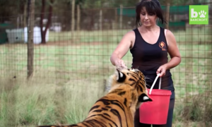 Family give up their home to take care of their beloved tigers and lions