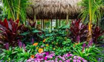 Aloha NYC: New York Botanical Garden Celebrates Culture of Hawaii