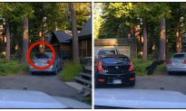 California Deputies Shoot Beanbags at Car Window to Free Trapped Bear